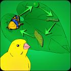 Wachsen ein Schmetterling icon