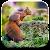 Autumn Wallpaper file APK Free for PC, smart TV Download