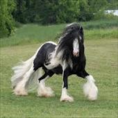 Horse Tips U.