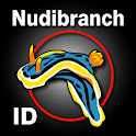 Nudibranch ID Western Atlantic icon
