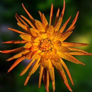 flower pixoto 4.JPG