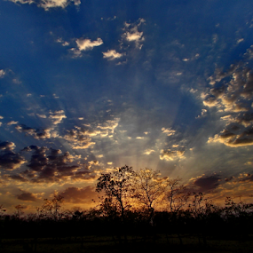 MORNING IN JUNGLE by Ashutosh Singhvi - Landscapes Cloud Formations ( clouds, dawn, sunrays, morning )