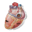 Sonidos Cardiacos icon