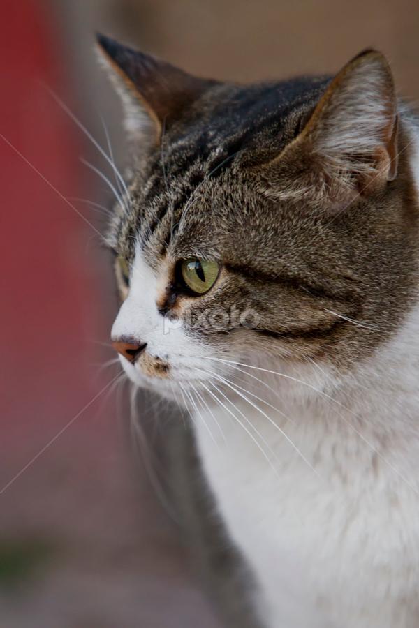 Female Cat by Cristobal Garciaferro Rubio - Animals - Cats Portraits