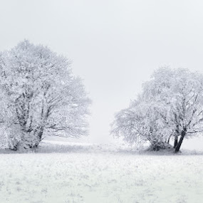 Frozen Brothers by Pavel Klásek - Landscapes Prairies, Meadows & Fields ( frost, white, double, field, two, winter, cold, tree, freeze, snow, meadow, trees, plain )