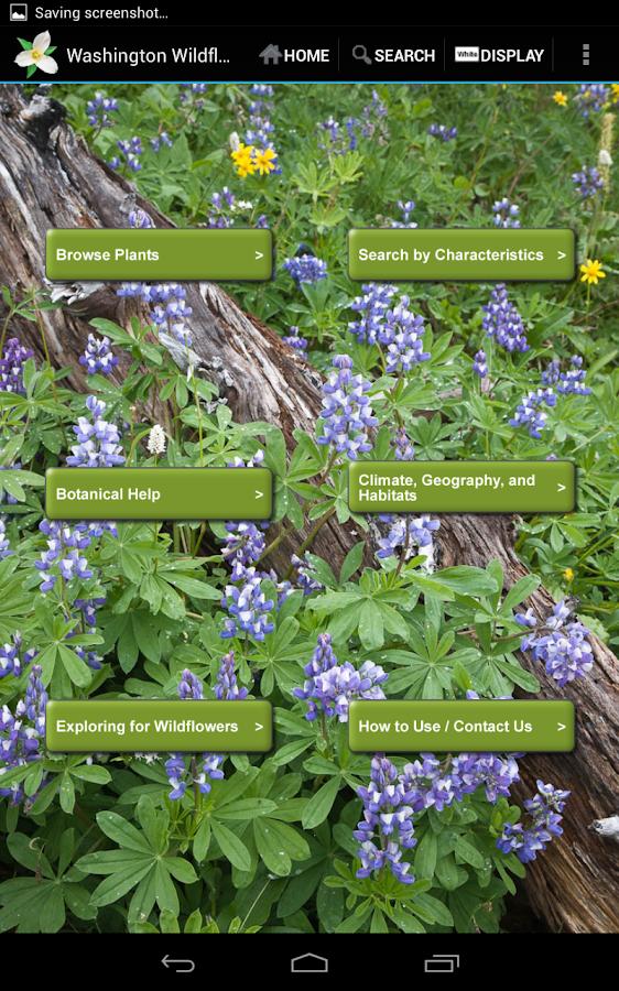 Washington Wildflowers- screenshot