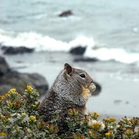 Nibbles by Matt Hulland - Animals Other ( waves, chipmonk, sea, beach, flowers )