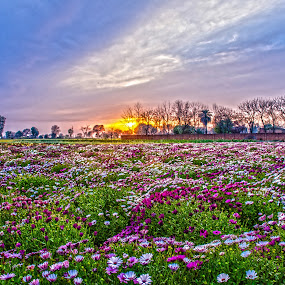 Colors of Nature by KP Singh - Flowers Flower Gardens ( punjab, nature, garden, ludhiana, flower )
