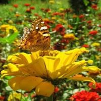 Screenshot of Butterflies Jigsaw Puzzles