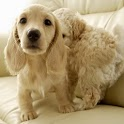 Puppy Pets Wallpapers icon