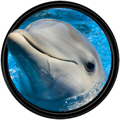 Dolphin [HD] Wallpapers