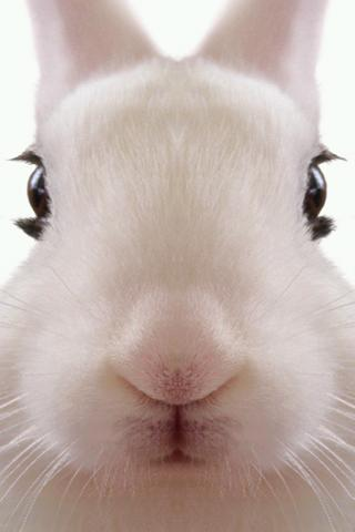 Rabbit LiveWallpaper - screenshot