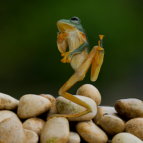 Kungfu Frog by Ubayoedin As Syam - Animals Amphibians