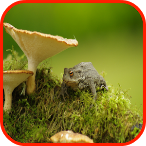 Download Toad Wallpape...
