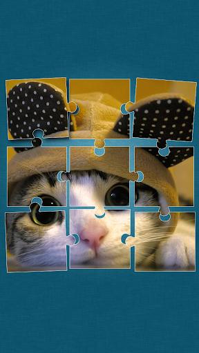 猫的益智游戏