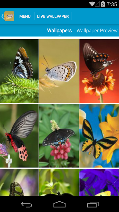 Image Result For Butterfly Live Wallpapersa