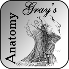 Gray's Anatomy 2012 icon