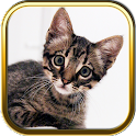 Free Kitty Cat Puzzle Games icon