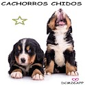 PUPPIES CHIDOS icon
