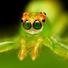 Magnolia Green Jumper