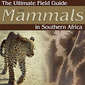 Ultimate Mammals Africa