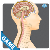 Nervous Anatomy Game