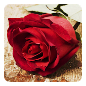 App Roses Live Wallpaper APK for Windows Phone