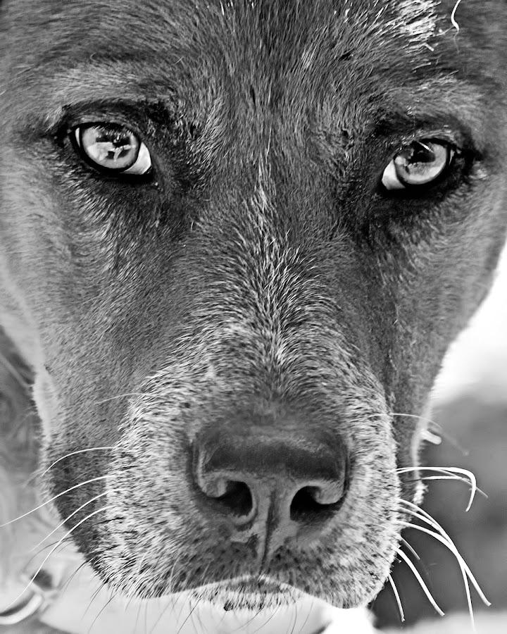 Eye to eye by Carlos De Sousa Ramos - Black & White Animals (  )