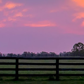 Morning Glory by Elizabeth Flamion - Landscapes Prairies, Meadows & Fields ( farm, sunrise, stables, kentucky, country,  )
