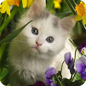 Cute Cat Live Wallpaper logo