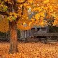 Free Autumn live wallpaper APK for Windows 8
