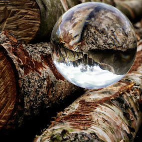 reflections by Kathleen Devai - Artistic Objects Still Life ( crystal ball wood trees sun light,  )