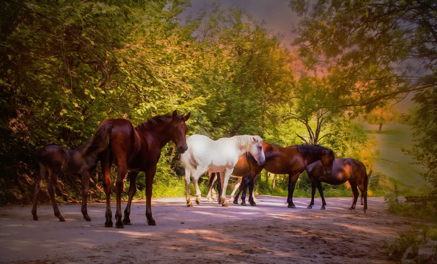 autumn by Nicoleta Paunas - Uncategorized All Uncategorized ( autumn, horse, composition, forest, light,  )