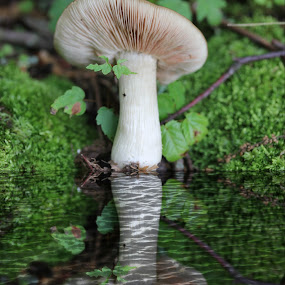 by Cheryl Hudnall Kincaid - Nature Up Close Mushrooms & Fungi