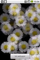Screenshot of White Flower Live wallpaper
