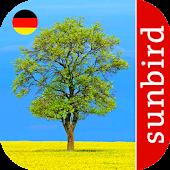 Baum Id - Deutschlands Bäume