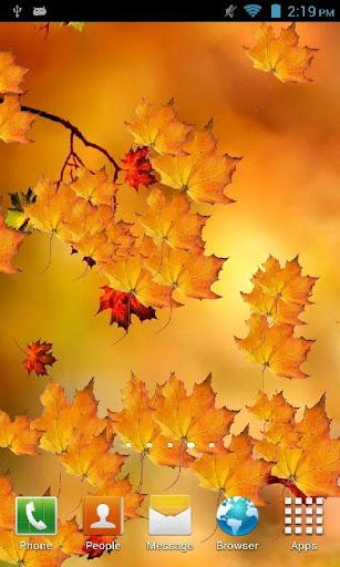 Autumn Branch Live Wallpaper