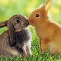 Rabbits Water LWP icon