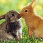 Rabbits Water LWP