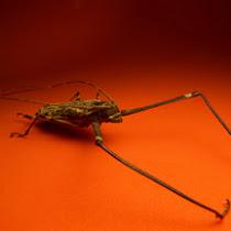 Beetles of Ecuador