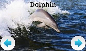 Screenshot of Best Sea Animals
