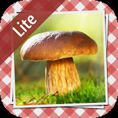 Pilze sammeln & bestimmen LITE