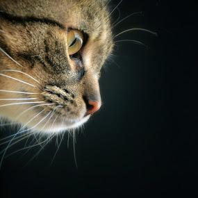 cat by Almasa Dalan - Animals - Cats Portraits