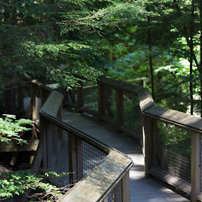Lonely path by Jordan Crick - Uncategorized All Uncategorized ( canon, nature, canada, capilano suspension bridge, ef 50mm, bc, lens, vancouver, , path, landscape )