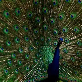 by Gayle M McDermott - Animals Birds (  )