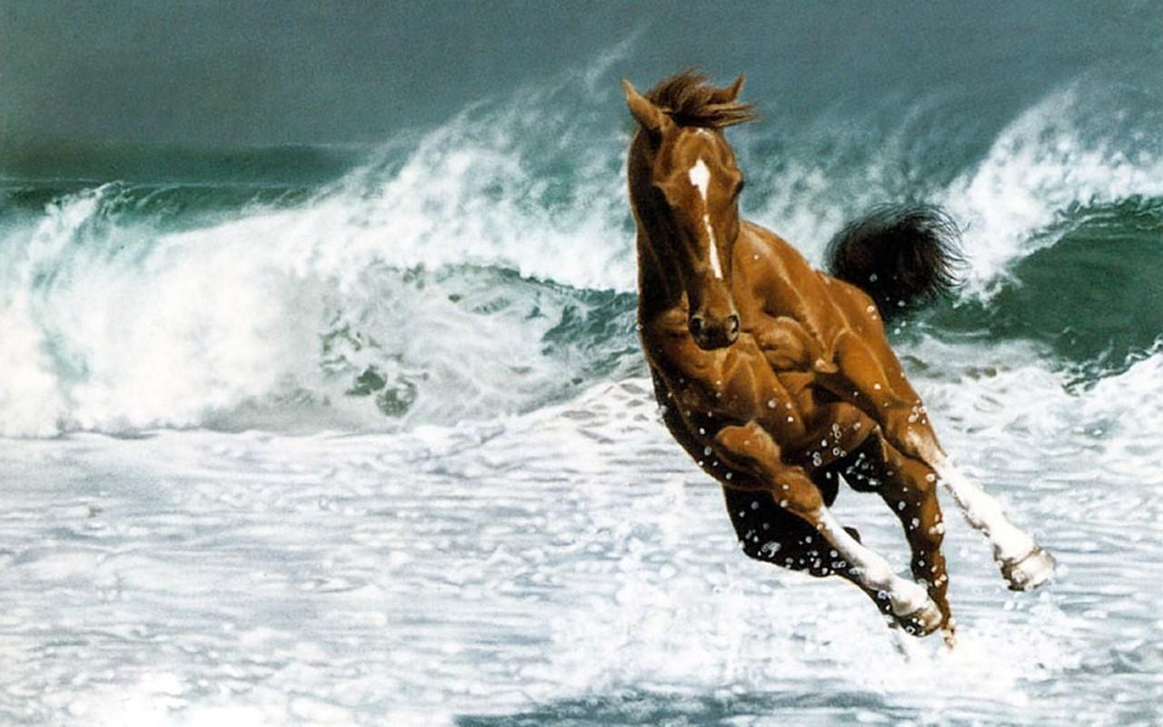 Horse wallpapers android apps on google play horse wallpapers screenshot voltagebd Choice Image