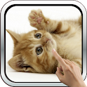 Playful ginger kitten icon