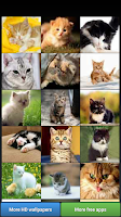 Screenshot of Cute Kitty Cats HD Wallpapers