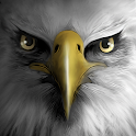 Eagle Play APK Cracked Download