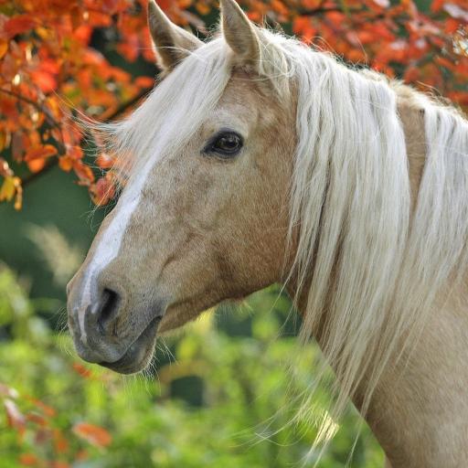 个人化のベスト馬の壁紙 LOGO-記事Game